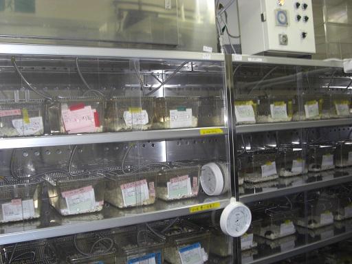 [183] マウス・ラット自動飼育装置システム 画像