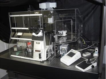 [198] 超解像レーザー顕微鏡 画像